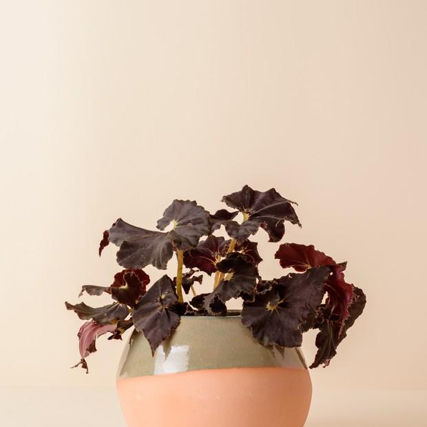 plantas-ornamentais-2021