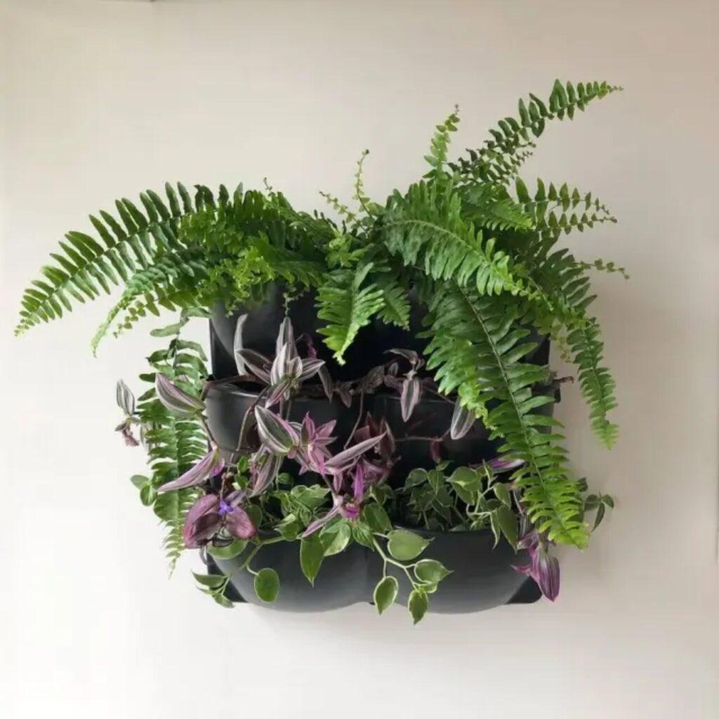Imagem de planta